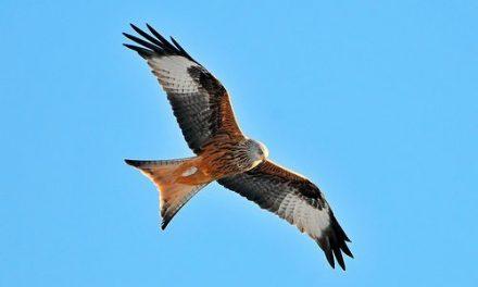 Twitter, l'oiseau qui donne des ailes à votre entreprise